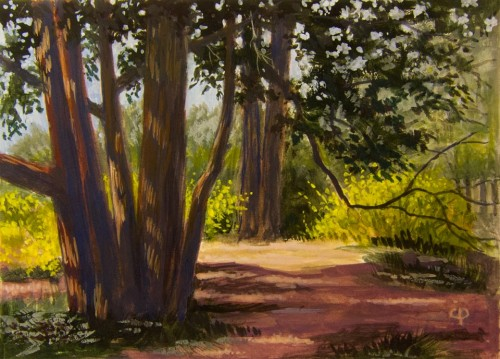 Cedars and Forsythia